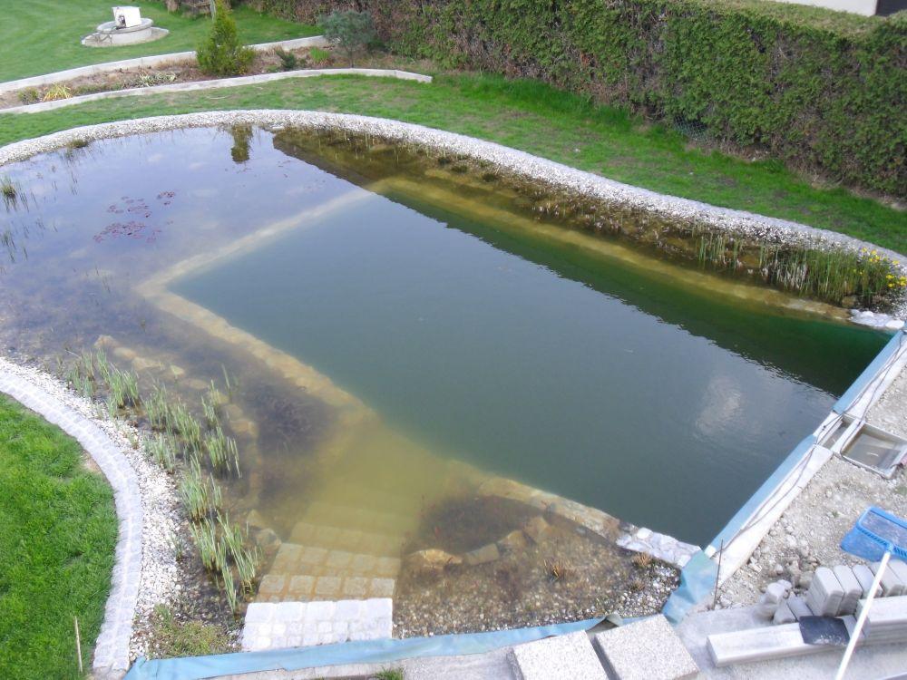 Wasser Im Schwimmteich Trub