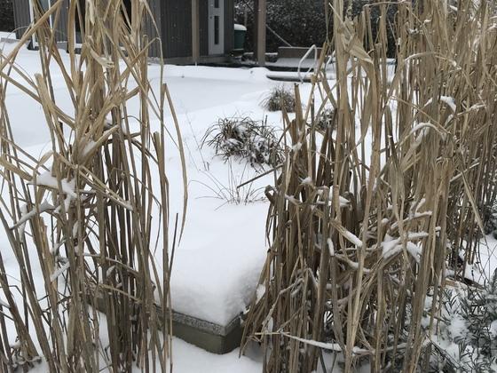 Naturpool Wintersaison