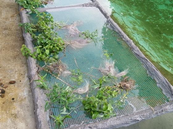 Lagoon@home Pflanzeninsel
