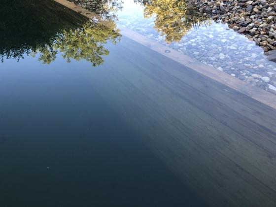 Das Holz Unterwasser