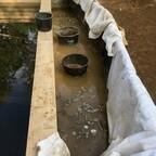 57 Wasserpflanzen Tiefwasserzone