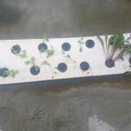 Salat im Teich