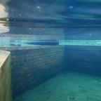 Ein aktueller Blick Unterwasser